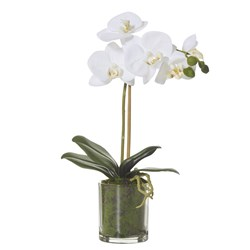Butterfly Orchid Glass Pot 38cm H