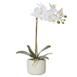 Butterfly Orchid Smooth Pot 45cm H